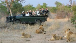 Is an African Safari Safe & How to keep safe on An African safari