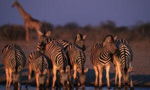 Namibia Safaris Tours