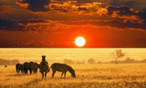 Rwanda Safaris Tours
