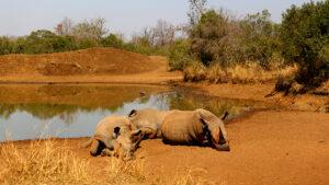 Swaziland Safaris