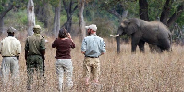 Zambia Safaris Tours