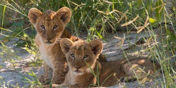 Zimbabwe Safaris Tours
