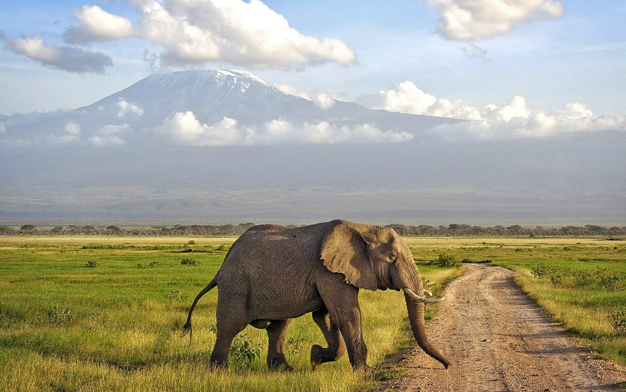 Kenya safaris trip