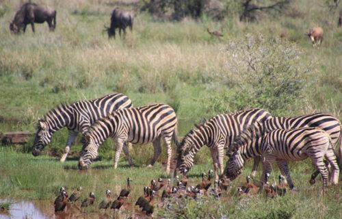 8 Days Kenya Safari & Beach Holiday: Africa Safari Tours