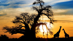 How Many Days Do you Need for an African Safari?