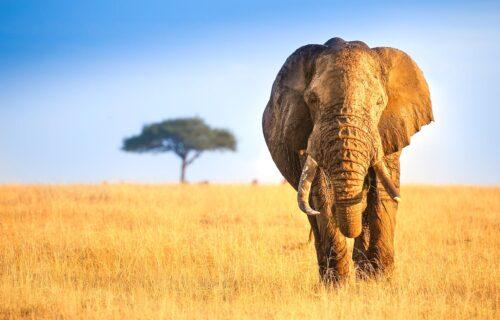 Maasai Mara National Park Kenya