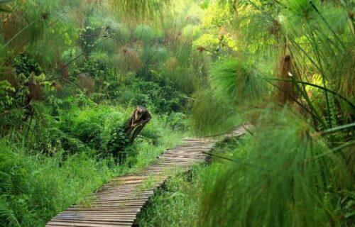 Bigodi Wetland Sanctuary
