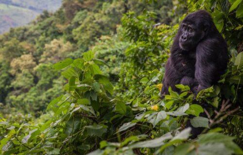 Bwindi ForestNational park