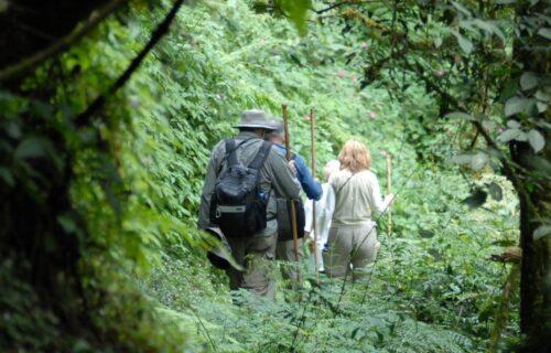 Dian Fossey Trek